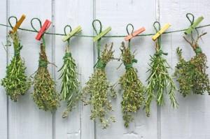 Mióma gyógyítása gyógynövényekkel